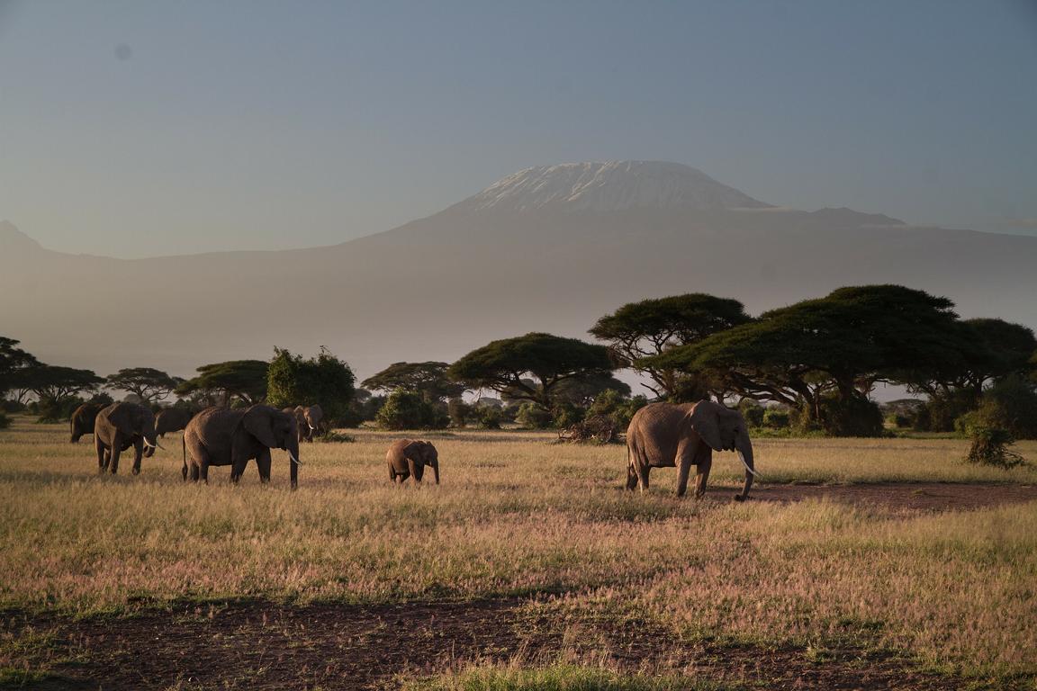 Kilimandscharo - auf dem Dach Afrikas